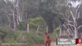 نبرد دیدنی بین حیوانات وحشی