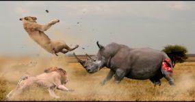 نبرد سنگین بین حیوانات وحشی ( جالب دیدنی)