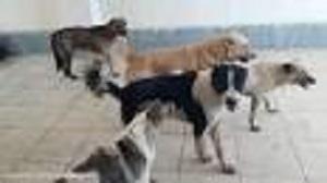 درگیری سگ ها