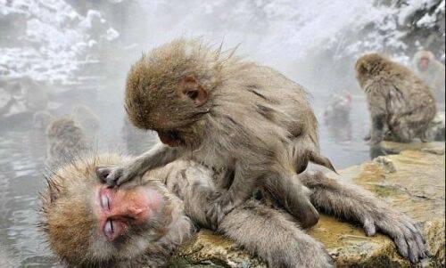 چگونگی جفت گیری حیوانات عادت های عجیب حیوانات در جفت گیری (2)