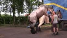 جفت گیری اسب