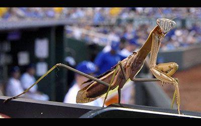 دنیای شگفت انگیز حشرات