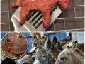 گوشت الاغ