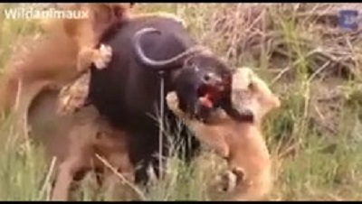 حیوانات وحشی