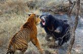 نبرد سگها با گربه سانان بزرگ