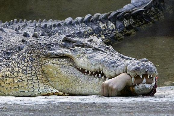 فجیع ترین حملات حیوانات به انسان ها