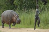 حمله حیوانات به انسانها ,لحظات نفسگیر ,حیوانات وحشی ,حیوانات, دانلود فیلم