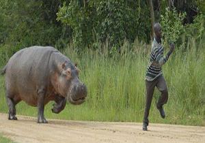 حمله حیوانات به انسانها ,لحظات نفسگیر ,حیوانات وحشی