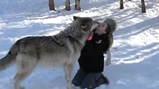 واکنش گربه وحشی به سگ در باغ وحش