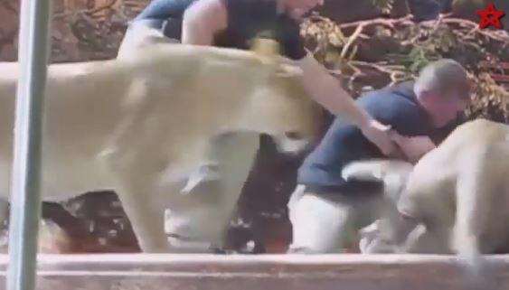 حمله وحشیانه حیوانات به انسان