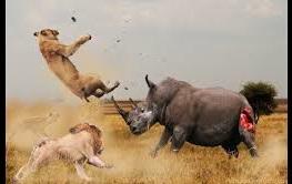 نبرد سنگین بین حیوانات وحشی