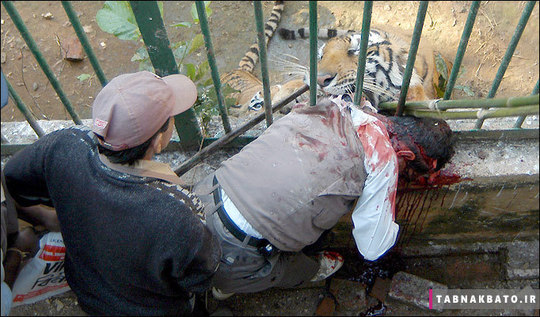 حملات مرگبار حیوانات به انسان ها