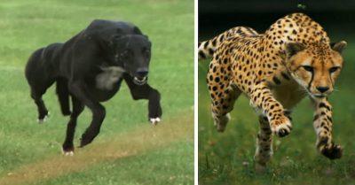 جنگ سگ