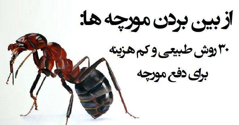 از-بین-بردن-مورچه-ها-2