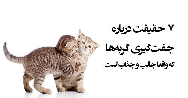 ۷ راز جفت گیری گربه ها که بسیار جالب و جذاب است