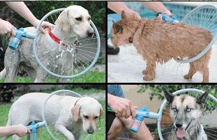 شستشوی سگ و حیوانات خانگی