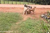 جنگ سگ های سرابی