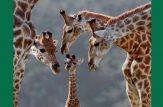عشق در حیوانات