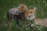 تصویری جالب از حیات وحش
