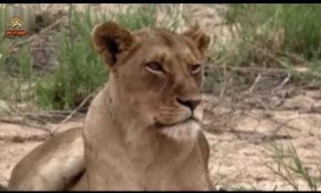 هفت قدرتمند در آفریقا مستند حیات وحش
