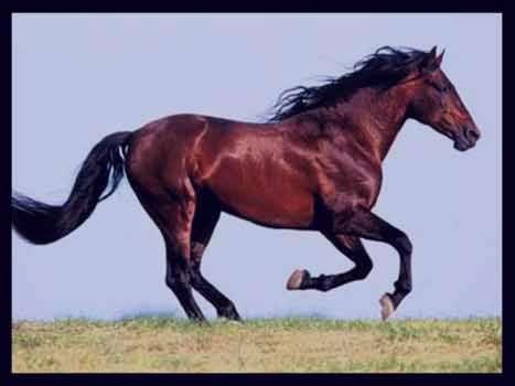جفتگیری اسب تو خواب