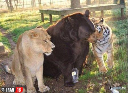 جفت گيري حيوانات وحشی