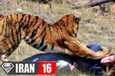 فیلم حیوانات لحظه حملات حیوانات به انسان + فیلم