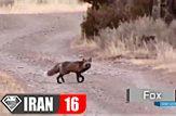 10 حیوان از وحشی ترین حیوانات