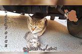 اشک گربه برای داغ فرزند