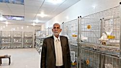 نمایشگاه کبوتران سفید زیبا برای اولین بار در ایران ویژه کفتر بازان