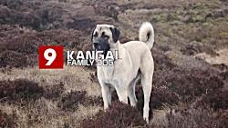 بزرگترین و بهترین نژاد سگ ها در جهان