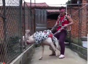 باورتون میشه این سگه یا اژدها ؟! سگ غول پیکر فوق وحشی
