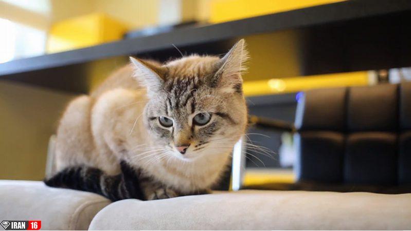 بهترین حیوان خانگی برای نگهداری در آپارتمان چیست؟