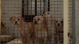 1300 سگ ایرانی را یکجا دیده اید؟ + عکس