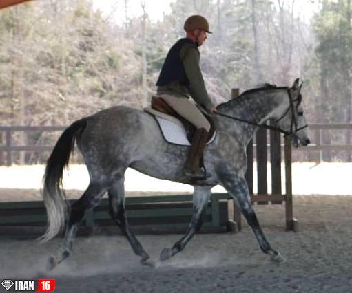تعبیر خواب جفت گیری اسب