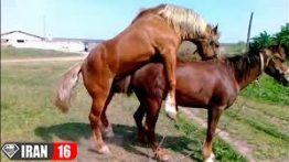 تعبیر خواب جفت گیری اسب (3)