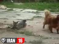 جفتگیری سگ و گربه