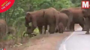 تشییع جنازه عجیب گله فیلها برای یک بچه فیل!