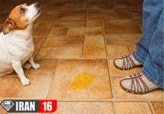 از بین بردن بوی ادرار و لکه ادرار سگ به روشهای آسان و کاربردی
