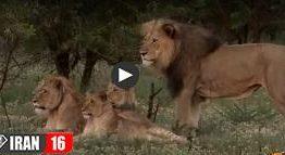 جفتگیری حیوانات اهلی و وحشی