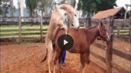 فیلم جفتگیری خر با اسب جفت گیری و تولید مثل حیوانات