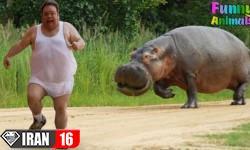 ۵۰ کلیپ دیدنی از لحظات خنده دار حیوانات