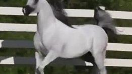 جفت گیری حیوانات ,جفت گیری اسب