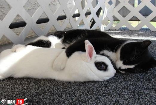 حیوانات حیات وحش ,جفتگیری خرگوش ,جفتگیری گربه ,جفتگیری