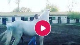 فیلم کشش اسب عرب به اسم دوران