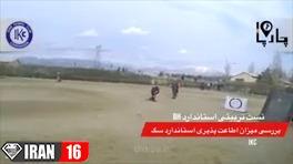 مسابقات سگ در ایران زیر نظر فدراسیون