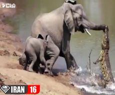 نجات باور نکردنی حیوانات توسط حیوانات دیگر