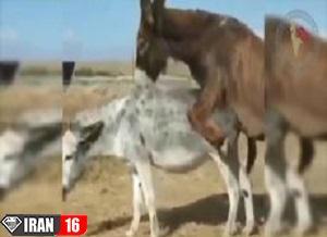 جفت گیریه حیوانات |  40 کلیپ خنده دار از جفت گیری حیوانات