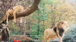 جفت-گیری-حیوانات-مختلف-عکس