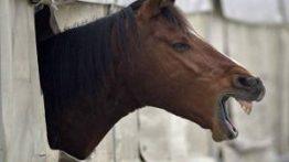 رابطه جنسی با اسب به مرگ ختم شد + فیلم